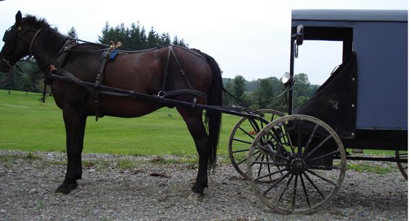 Amishbuggy